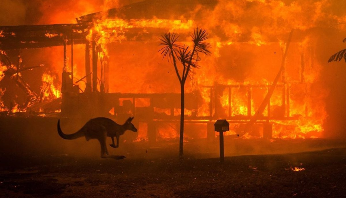 a house burning down in the background while a kangaroo passes in front of the camera